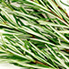 ingredient rosemary - Antiox-6™ Daily